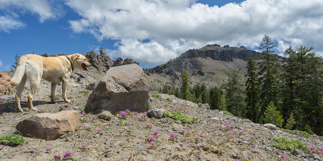 Lake Tahoe Hiking Trails: Castle Peak Trail