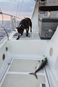 Dogs fishing