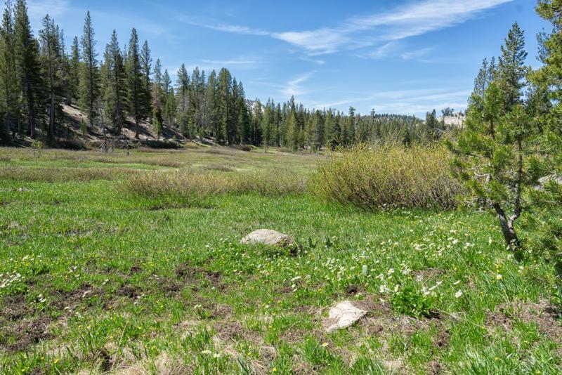 Tahoe Meadows Wildflowers