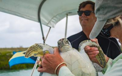 Bahamas Sea Turtle Research