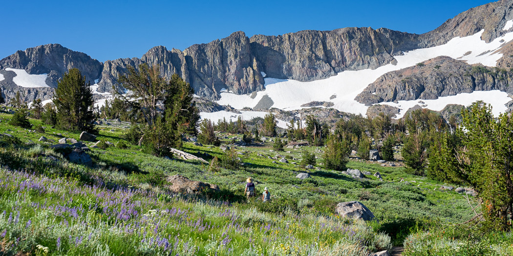 South Lake Tahoe Hiking Trails: Wildflowers and Winnemucca Lake via Carson Pass