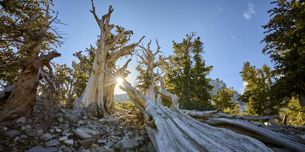 Great Basin National Park, Nevada – Bristlecone Pine & Glacier Trail