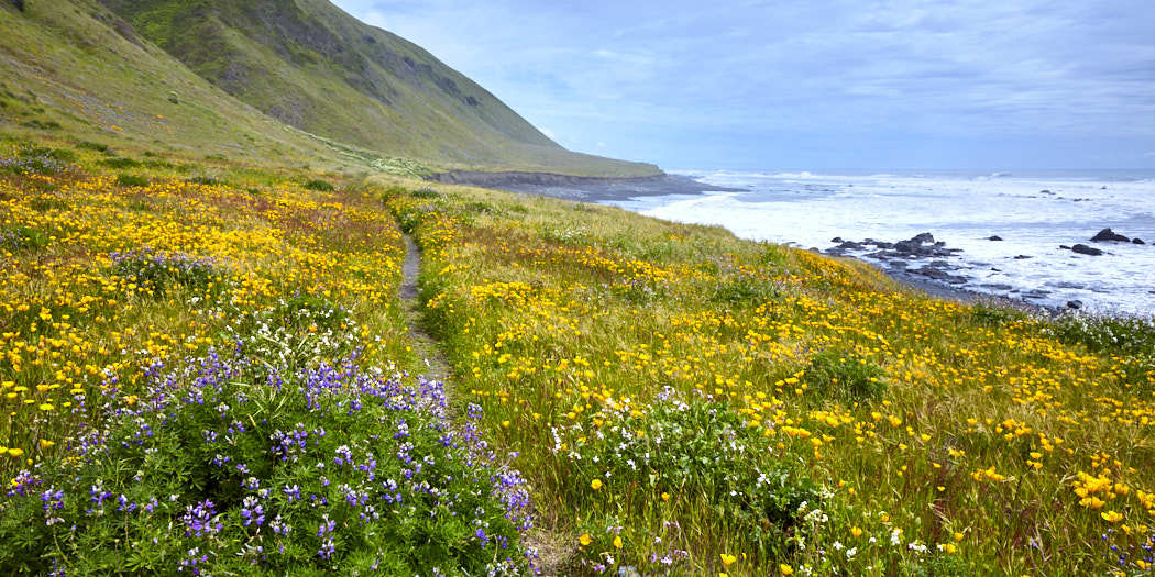 Backpacking the Lost Coast Trail – Everything you Need to Know