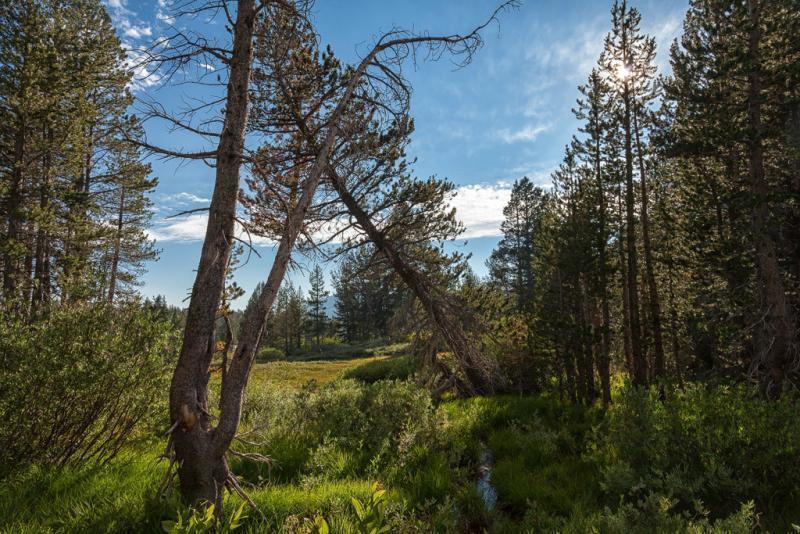 Tahoe Meadows