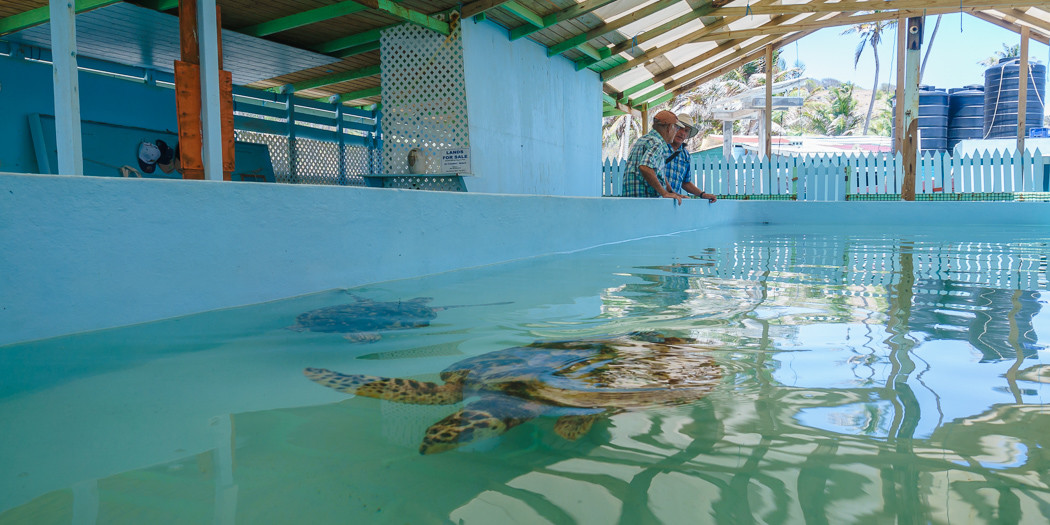 Bequia: The Story of the Old Hegg Turtle Sanctuary